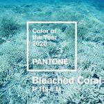 Vystřídá pro rok 2020 korálovou červeň barva mrtvého korálu?